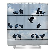 Show Off Shower Curtain by Cynthia Decker