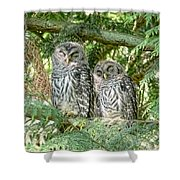 Sleeping Barred Owlets Shower Curtain by Jennie Marie Schell