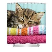 Sleepy Kitten Shower Curtain by Greg Cuddiford