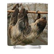 Sloth Shower Curtain by Ellen Henneke