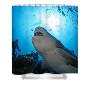 Snacking Bull Shark Shower Curtain by Dave Fleetham