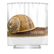 Snail Shower Curtain by Elena Elisseeva