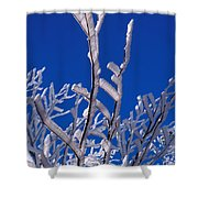 Snow And Ice Coated Branches Shower Curtain by Anonymous
