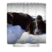 Snow Eaters Shower Curtain by Patti Whitten