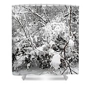 Snow Scene 4 Shower Curtain by Patrick J Murphy