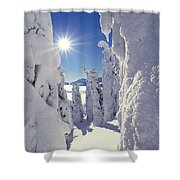 Snowscape Snow Covered Trees And Bright Sun Shower Curtain by Anonymous