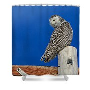 Snowy Owl Shower Curtain by Everet Regal