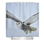 Snowy Owl In Flight Shower Curtain by Everet Regal
