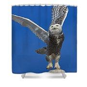 Snowy Owl Taking Flight Shower Curtain by Everet Regal