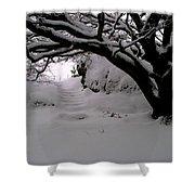 Snowy Path Shower Curtain by Amanda Moore