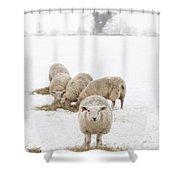 Snowy Sheep Shower Curtain by Anne Gilbert