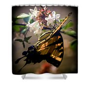 Soft As The Morning Light Shower Curtain by Karen Wiles