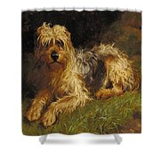 Soft Coated Wheaten Terrier  Shower Curtain by Alfred Duke