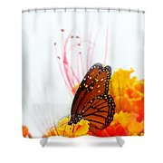 Soft Embrace Shower Curtain by Kume Bryant
