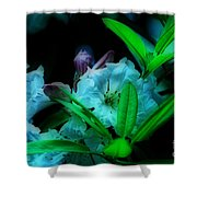 Softness Shower Curtain by Cheryl Young