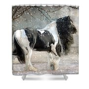 Solitary Shower Curtain by Fran J Scott
