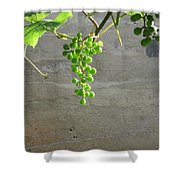 Solitary Grapes Shower Curtain by Deb Martin-Webster