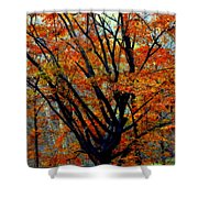 Song Of Autumn Shower Curtain by Karen Wiles