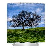 Sonoma Tree Shower Curtain by Chris Austin