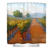 Sonoma Vineyard Shower Curtain by Carolyn Jarvis