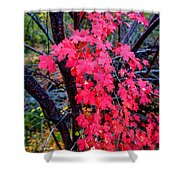 Southern Fall Shower Curtain by Chad Dutson