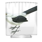 Southern Pied Babbler  Shower Curtain by Anonymous