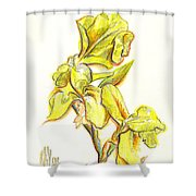 Spanish Irises Shower Curtain by Kip DeVore