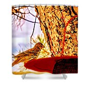 Sparrow Pine Tree Feeder Shower Curtain by Bob and Nadine Johnston