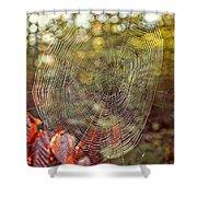 Spider Web Shower Curtain by Edward Fielding