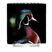 Spotlight Wood Duck Shower Curtain by Steve McKinzie