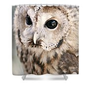 Spotted Owl Shower Curtain by Shoal Hollingsworth