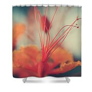Spread The Love Shower Curtain by Laurie Search