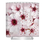 Spring Cherry Blossom Shower Curtain by Elena Elisseeva