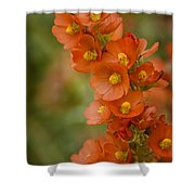 Spring Color Shower Curtain by Saija  Lehtonen