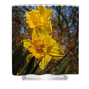 Spring Daffodils  Shower Curtain by Brian Roscorla