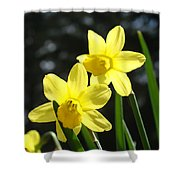Spring Floral Art Prints Glowing Daffodils Flowers Shower Curtain by Baslee Troutman
