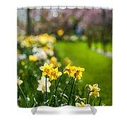 Spring In Holland. Garden Keukenhof Shower Curtain by Jenny Rainbow