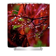 Spring Rain Shower Curtain by Rona Black