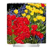 Spring Sunshine Shower Curtain by Carol Groenen