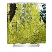 Spring Weeping Willow Shower Curtain by Will Borden