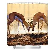 Springbok Dual In Dust Shower Curtain by Johan Swanepoel