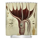 Squid Shower Curtain by A Chazal