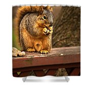 Squirrel Eating A Peanut Shower Curtain by  Onyonet  Photo Studios