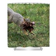 Squirrel Nest Bulding Shower Curtain by Robert Bales