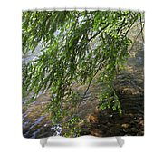 Stalking Trout Shower Curtain by John Stephens