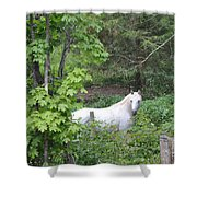 Stallion On Independence Day Shower Curtain by Patricia Keller