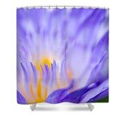 Star Of Siam Waterlily Shower Curtain by Priya Ghose