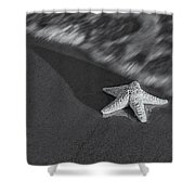 Starfish On The Beach Bw Shower Curtain by Susan Candelario