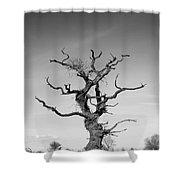 Stark Tree Shower Curtain by Pixel Chimp