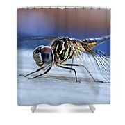 Stop By Tiger Dragon Fly Shower Curtain by Peggy  Franz